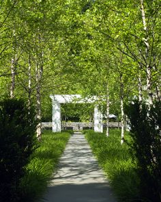 Greenwich Residence. A bluestone path through the birch grove leads to the pool terrace with a fountain spout as the terminus. / Stephen Stimson Associates