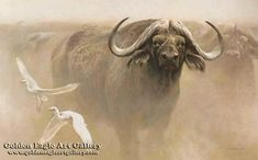 Robert Bateman - Master of the Herd - African Buffalo - Search Gallery One for Bateman, Robert limited edition prints, giclee canvases and original paintings by internationally-known artists Wildlife Paintings, Wildlife Art, Animal Paintings, St Louis Zoo, African Buffalo, Hunting Art, Nature Artists, Africa Art, African Animals
