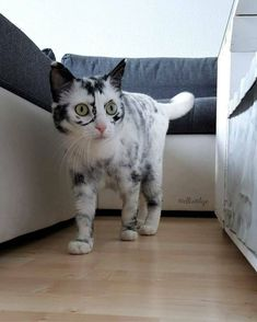 Cats Diy, Cute Cats And Kittens, Baby Cats, I Love Cats, Cool Cats, Pretty Cats, Beautiful Cats, Animals Beautiful, Beautiful Gorgeous