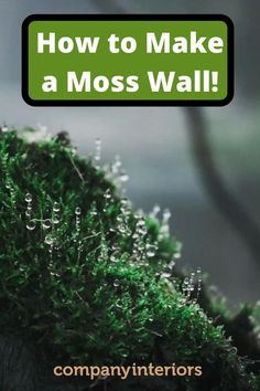 In Our Moss Shop you will find how to use your moss wall art to build a moss wall using preserved moss. The Moss used in Ball Moss , Flat Moss and Lichen. The Moss wall requires no maintenance. These Pre-Made Panels Make is Easy and Quick to Build an Amazing Moss Wal.  So you can create your own moss wall and install in your office or home. Interior Designers like to specify moss walls as they create a eco-friendly style to their interior home décor.#mosswalldesign #mosswalldesigner… Money Tree Bonsai, Bonsai Tree Care, Money Trees, Moss Wall Art, Moss Art, Moss Garden, Garden Art, Garden Design, Garden Ideas