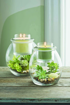 Create you very own mini terrarium in our Clearly Creative Escential Jar and Glo. - Partylite - Create you very own mini terrarium in our Clearly Creative Escential Jar and GloLite Jar holders fo - Mini Terrarium, Decor Terrarium, Succulent Terrarium, Terrarium Ideas, Candle Lanterns, Diy Candles, Candle Jars, Candle Holders, Bougie Partylite