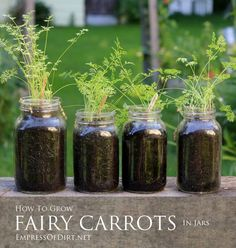How to grow adorable fairy carrots in jars. Fun for kids!I wanna grow fairy carrots!