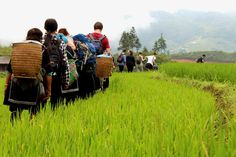 Sapa homestays and trekking