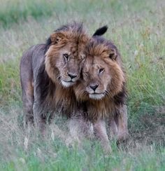 Bonding Brothers