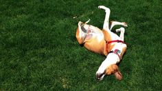 Harvard Business Review Asks: It's the Weekend...Why Are You Working?