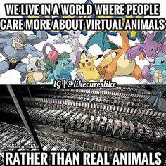 please tune into reality - why finance animal cruelty go #vegan #compassion