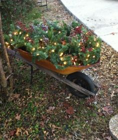 Old wheel barrow decorated for Christmas.