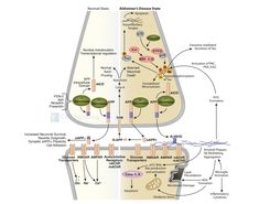 CST - Amyloid Plaque Formation in Alzheimer's Disease Signaling Interactive Pathway