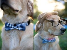 This dog is dressed to the nines for a wedding in his bow tie and spectacles! via @Ruffled