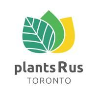 High quality and affordable tropical house plants shop online and in person in Toronto Ontario, ships nationwide in Canada. Tropical House Plants, Tropical Houses, Hoya Plants, Plants Online, Create Website, Toronto, Shops, 20 Years, Landscaping