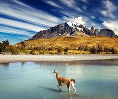 Besök Chile. Guanaco över floden i Torres del Paine nationalpark. Patagonia turer, Chile turism.