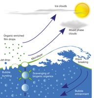 Sea-spray aerosol particles enriched in organic material are generated when bubbles burst at the air-sea interface.
