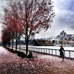Running through Fall #vancouver iphoneography NikNaz K.