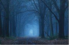 florestas sombrias - Pesquisa Google