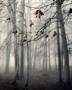 photography, nature, landscape, fog, mood, tree, trees, fall, winter 8 x 10 print