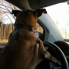Samson, off to run some errands