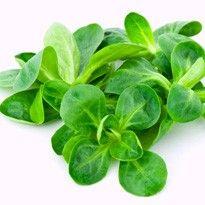 Gartenkalender - Bis Mitte des Monats Feldsalat und Spinat im Freiland aussäen