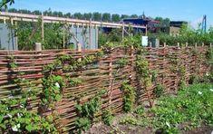 Decorative Wire Yard Fencing   Grandiflora :: Wholesale Nursery :: Cool Pics
