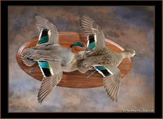 drake and hen green wing teal mount - Google Search