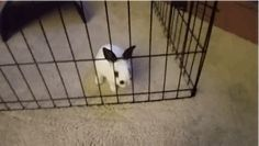 But it turns out that it does absolutely NOTHING. | This Is What Happens When You Buy The Wrong Size Cage For Your Pet Rabbit