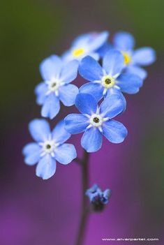 """These little flowers remind me of an amazing talk given by Dieter F. Uctdorf called """"Forget-me-not."""" If you haven't read it, I encourage you to read it, LDS or not. It's beautiful!"""