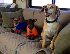 Petey, Spencer, and Parlay enjoying the ride to Zion National Park, Springdale, Utah.