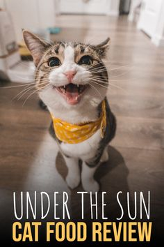 Under The Sun cat food review, recalls, ingredients and everything you should know about this cat food brand. #catfood #cat #catfoodreview Animal Nutrition, Pet Nutrition, Cat Food Brands, Homemade Cat Food, Best Cat Food, Cat Ages, Kitten Care, Stand Up Comedians, Cat Treats