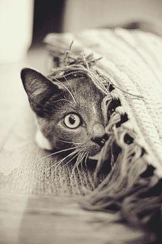 Joy with peek a boo!