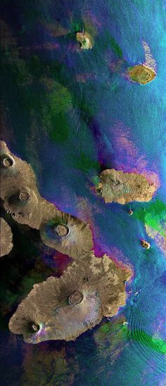 This Envisat image features the Galapagos Islands, an archipelago situated some 1,000 km to the west of Ecuador in the Pacific Ocean. Galapagos's largest island is Isabela (visible). The five volcanoes seen on the island are (from north to south): Wolf Volcano, Darwin Volcano, Alcedo Volcano, Sierra Negra Volcano and Cerro Azul Volcano. The bigger island to the right of Isabela is Santiago Island.