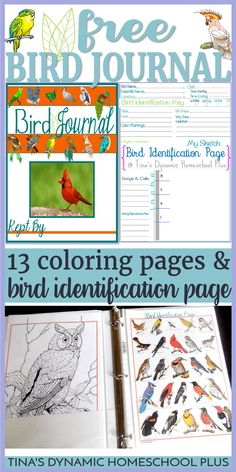 Free Bird Journal {Coloring & Identification Pages} – - Lovely Pets World Nature Activities, Science Activities, Science For Kids, Science And Nature, Bird Identification, Bird Coloring Pages, Science Fair Projects, Nature Journal, Nature Study