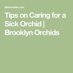 Tips on Caring for a Sick Orchid | Brooklyn Orchids