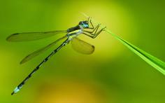 Bryan Peterson, exposure, macro, dragon-fly, green, blur