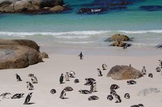 The Penguin S Paradise In Boulders Beach South Africa In 2019 Beautiful Places To Visit, Beautiful Beaches, Beach Images Hd, Boulder Beach, Beach Wallpaper, In 2019, Best Location, Beach Photography, Bouldering
