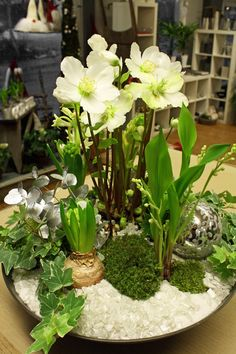 Hyacinter under båge. Arrangements Ikebana, Floral Arrangements, Christmas Flowers, White Christmas, Christmas Arrangements, Christmas Decorations, Art Floral Noel, Spring Bulbs, Deco Floral