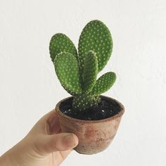 I'm getting reaaaaal close to having absolutely nowhere put house plants in my house. Guess I need another house then  by toandfroblog