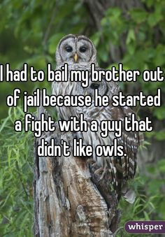 """I had to bail my brother out of jail because he started a fight with a guy that didn't like owls. """