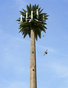 Cell Tower Tree (Bakersfield, California)