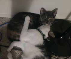 Plums and Potato (PAWS name Snacker and Tippy) #pawschicago #pawsalumni