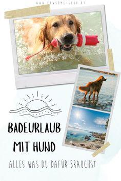 Es gibt nicht schöneres, als mit unseren Lieblingen Zeit in der Natur zu verbringen. Dabei darf die richtige Ausrüstung natürlich nicht fehlen. Auf unserer Website findest du nachhaltiges und natürliches Hundezubehör für dein Abenteuer mit Vierbeiner. Badeurlaub mit Hund   Schwimmen   Wandern mit Hund   Urlaub mit Hund   Hundezubehör   Pawsome Polaroid Film, Dog Accessories, Swimming, Sustainability, Adventure, Hiking