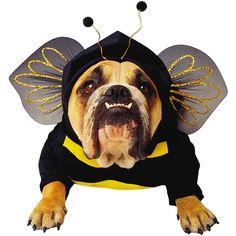 Zelda Bee Dog Costume - Pet Costume * Trust me, this is great! Click the image. : Accessories for dog