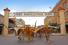 Fort Worth, Texas  - CountryLiving.com