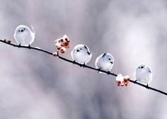 snow birds.