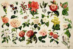 Antique Botanical Floral Graphics Mega Pack