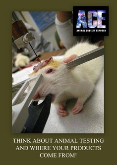 Model 900 Small Animal Stereotaxic Instrument originally designed by David Kopf Instruments in 1963, is a versatile, easy-to-use instrument that facilitates proper alignment of small animals for the stereotaxic placement of electrodes, micropipettes, cannula and other devices