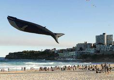 Жители Сиднея запустили в воздух воздушный змей в виде касатки, на ежегодном Фестивале ветров.