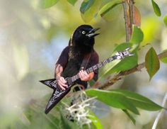 Dreamer, Wanderer - Your dash lacks some birds with arms. Guitar