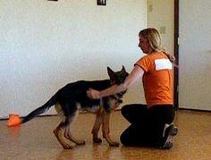 German Shepherd Puppy Bite Inhibition Games