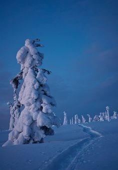 Sunset and blue moment in Lapland near Ylläs, Finland.