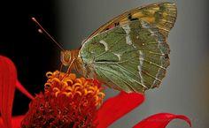 butterfly 2 - a butterfly on a flower