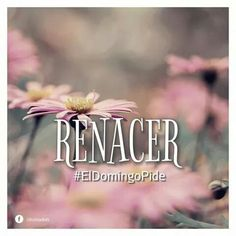 #Renacer #divinodon #ElDomingoPide